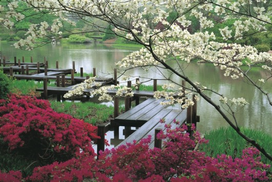 japanese-garden-wallpaper-hd-w0f79xih